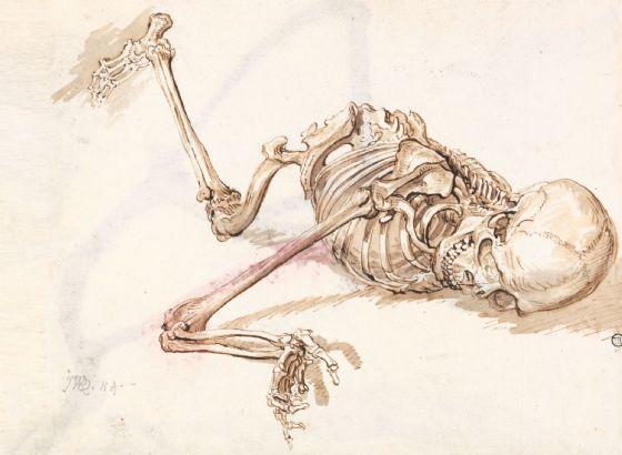 Ward, James: A Human Skeleton. Fine Art Print/Poster (5039)